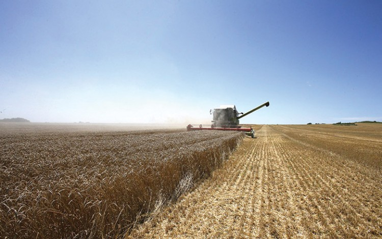 Ukrainian farmers prepare for country's second-highest ever grain harvest