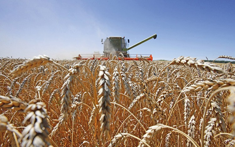 UKRAINIAN AGRICULTURE: Breadbasket of Europe suffers from lack of brand confidence