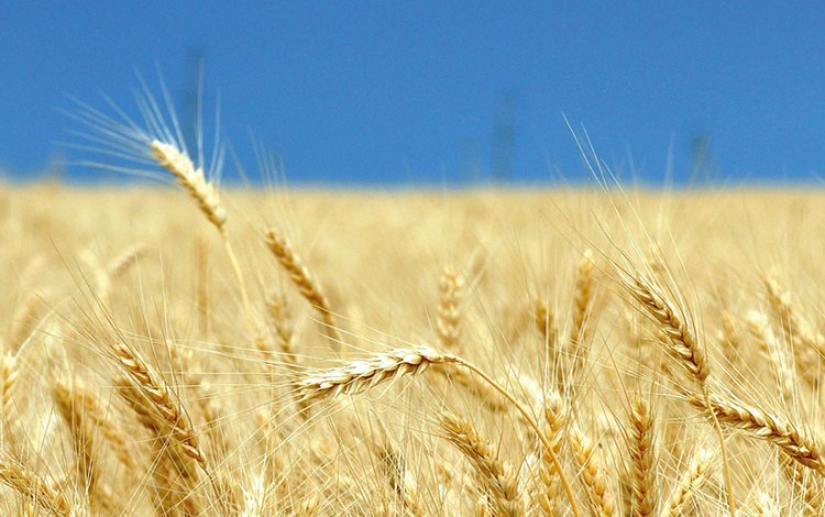 UKRAINE ENTERS 85 NEW AGRICULTURE EXPORT MARKETS AS TRADITIONAL EUROPEAN BREADBASKET GOES GLOBAL